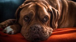 pelíšek pro psa